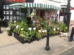 Marcus Dancer Plants Hampshire Farmers Market