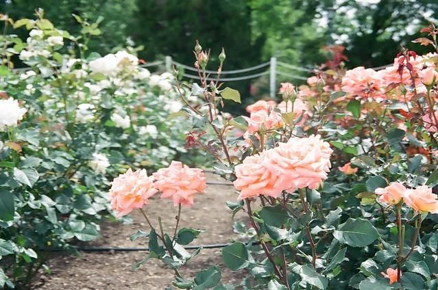 140722_Plant 2