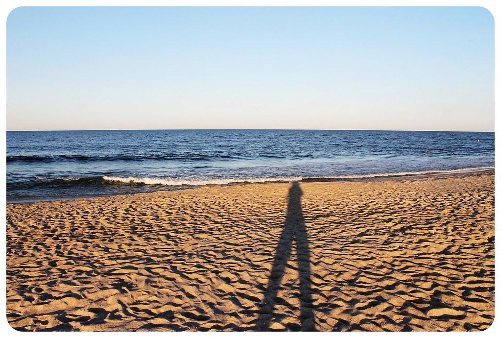 sandy hook dani shadow