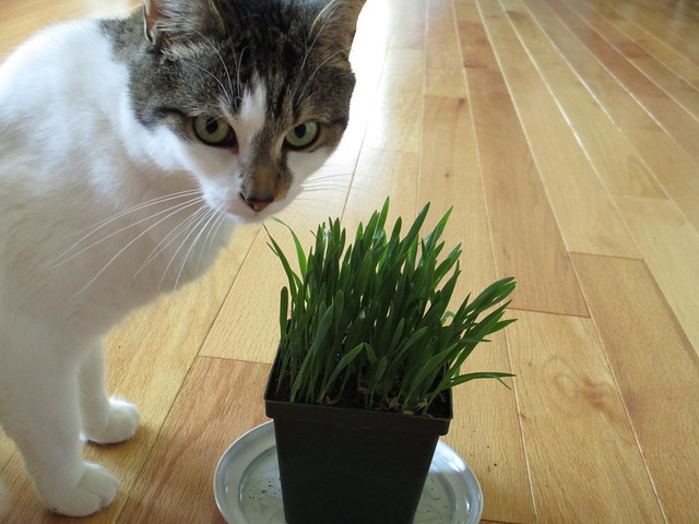 Penny and cat grass
