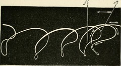 "Image from page 244 of ""The structure and life of birds"" (1895)"