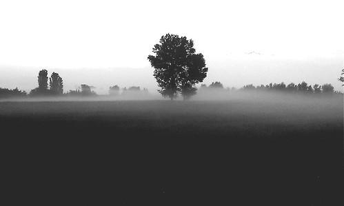 tree nature fog sunrise alba july natura campagna terra nebbia albero flatland luglio