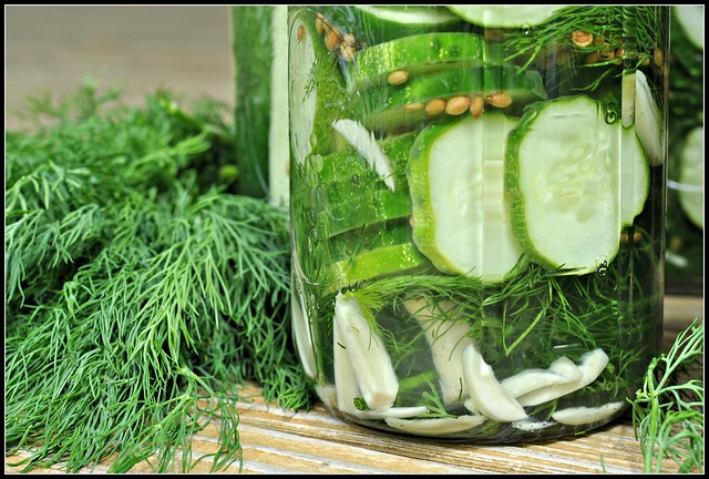 Easy Garlic Dill Refrigerator Pickles 4