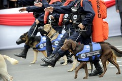 conformation show(0.0), dog(1.0), pet(1.0), police dog(1.0),