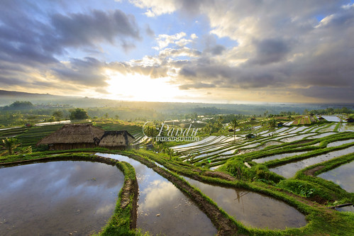 morning bali field sunrise indonesia landscape photography tour village rice glory guide blackcard jatiluwih tabanan baliphotography balitravelphotography baliphotographytour jokowi9juli baliphotographyguide