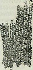 """Image from page 458 of """"Human physiology"""" (1856)"""