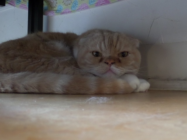 Sleeping Cat (Bruiser)