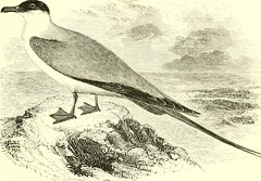 """Image from page 724 of """"An illustrated manual of British birds"""" (1889)"""