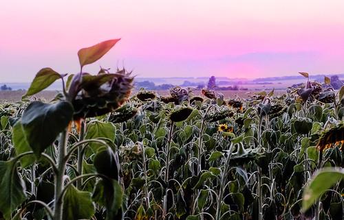 nature ukraine sunrisessunsets placetravel placetravelnature poltavakremenchuk