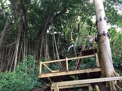 outdoor structure(0.0), canopy walkway(0.0), tree house(0.0), bridge(0.0), rainforest(1.0), wood(1.0), tree(1.0), forest(1.0), natural environment(1.0), jungle(1.0),