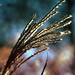 Strands of Life by Hi-Fi Fotos