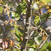 baww-f-bocaciega-3-04-17-tl-1-cropscreen