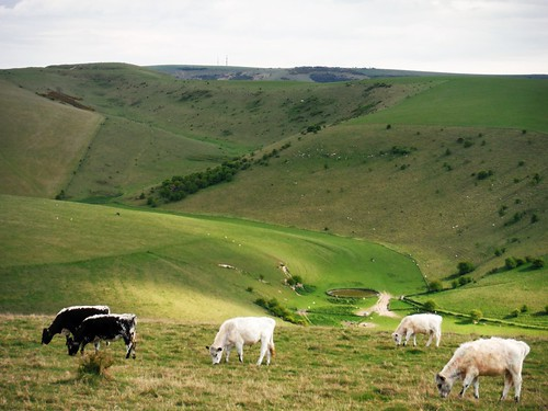 View up Caburn Bottom to Caburn Hillfort (with cows)