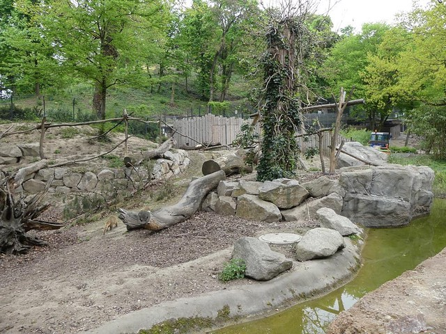 Nasenbärgehege, Zoo Karlsruhe