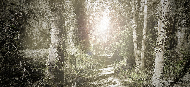 Road on light
