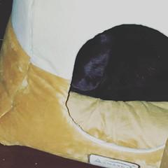 #sleepingkitty #pouchbed see the sleeping kitty