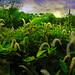 Lizard Tails by Karen Kleis (Always catching up)