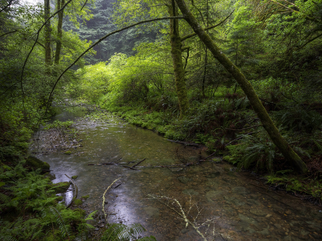 Redwood Creek Is Calm on a Rainy Morning