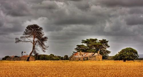 The wheat farmer