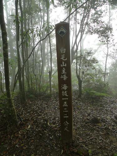 20140426-白毛山 (102)