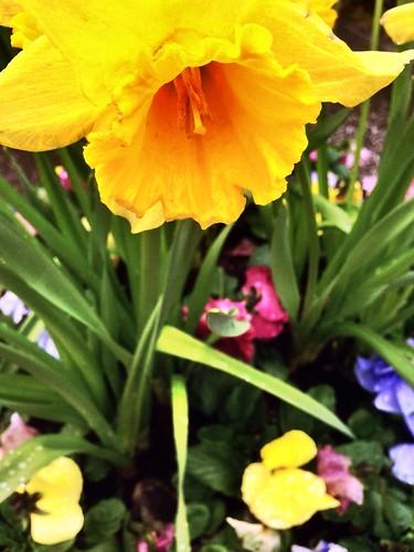 Flower - Project 365 / 135