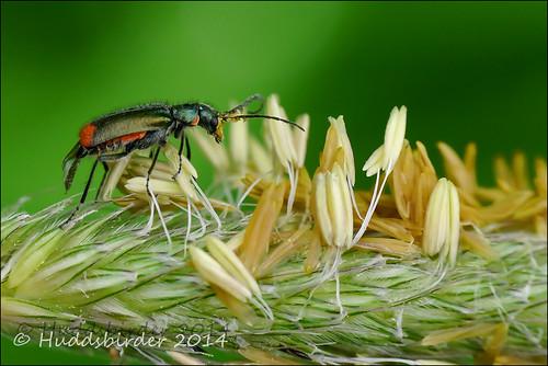 Beetle Sp??