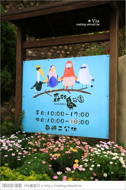 【新竹景點推薦】森林鳥花園~親子旅遊的好去處!在森林裡鳥兒與孩子們的樂園5