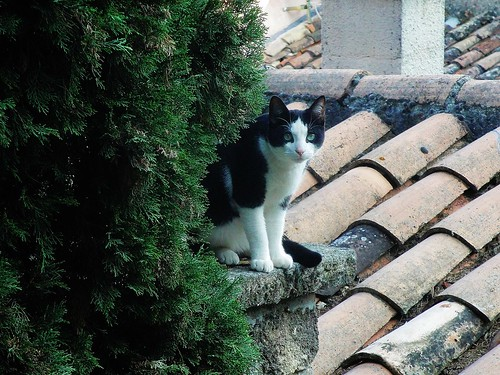 Chat à Badarrides