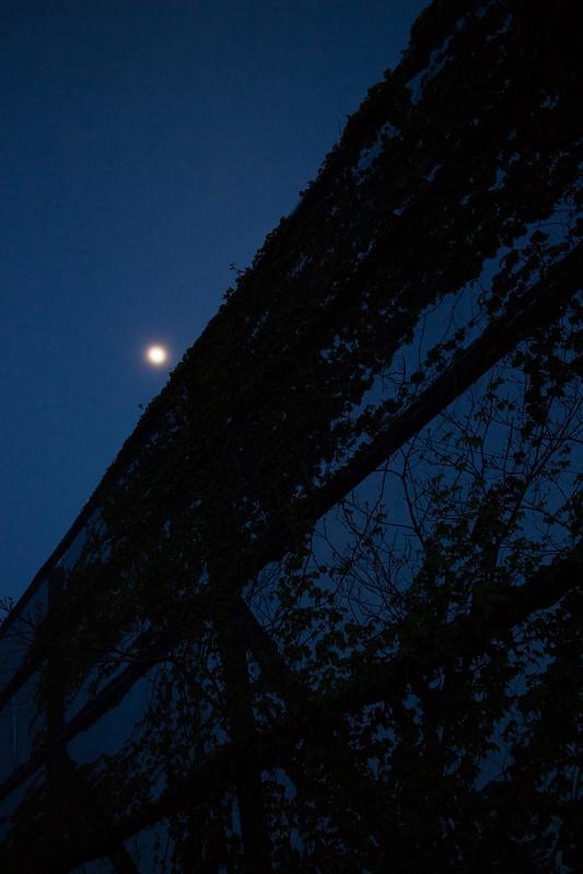 kokyo - moon