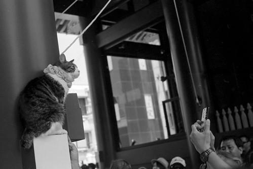 雷門の招き猫