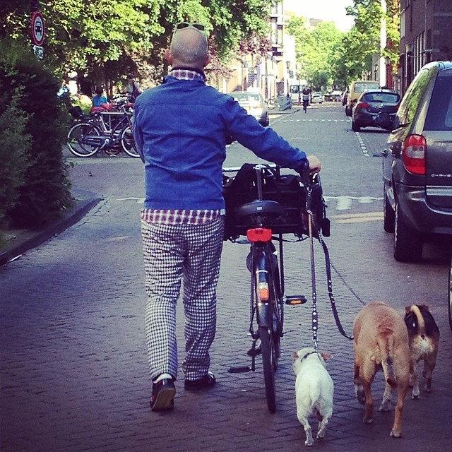 Walking with 1 bike and 3 dogs!  #dogs #bikeanddogs #bikeams #Amsterdam very stylish man