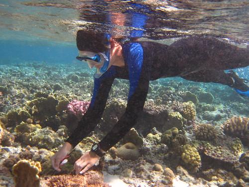 研究人員在珊瑚礁群集中標註。(攝影:Steve Palumbi)