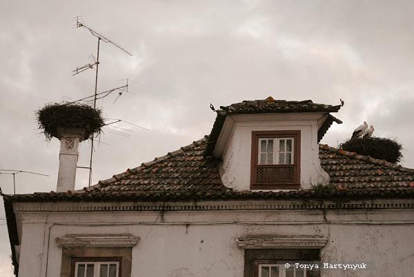 49 - Castelo Branco Portugal - Каштелу Бранку Португалия