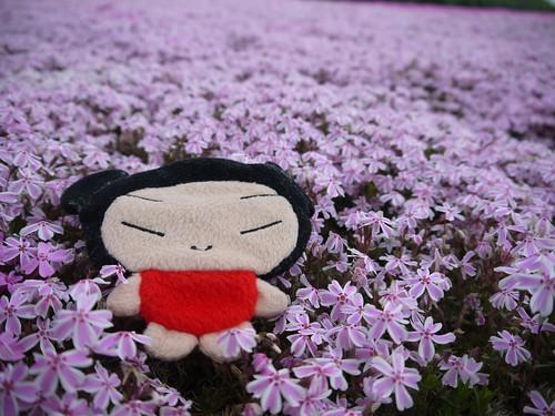富士芝桜祭り