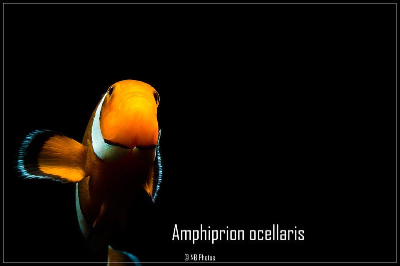 Les poissons du club en photos ! 14276490983_3b3160c8c4_c