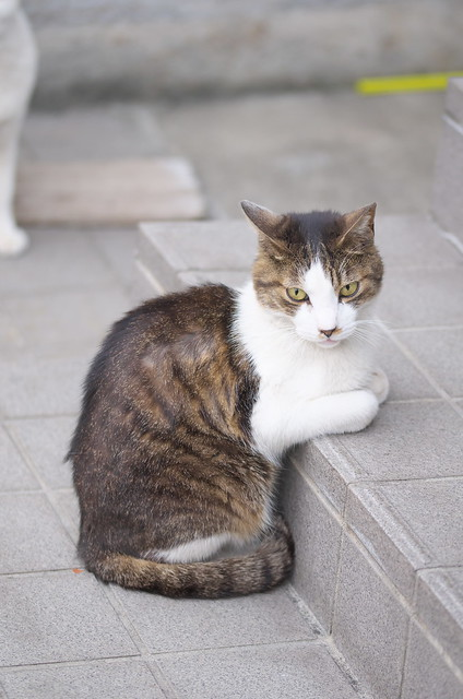 東京路地裏散歩 荒川のネコ 2014年6月21日