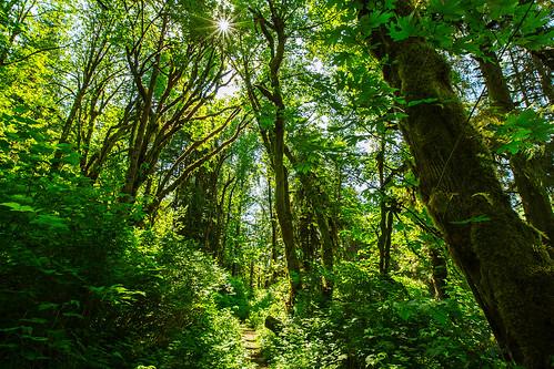 trees trail sunstar snohomishcounty limekilntrail robecanyonhistoricalpark
