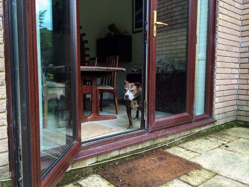 Jez peers out the patio door