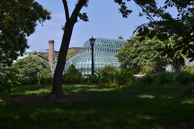 The Palm House. Photo by Morrigan McCarthy,