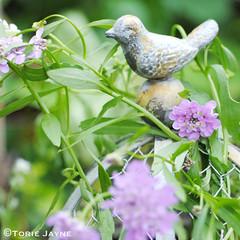Bird on Ball Garden Ornament @MiaFleur