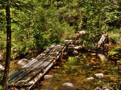 Allen Bridge