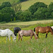 Small photo of All the pretty horses