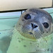 Small photo of Seal