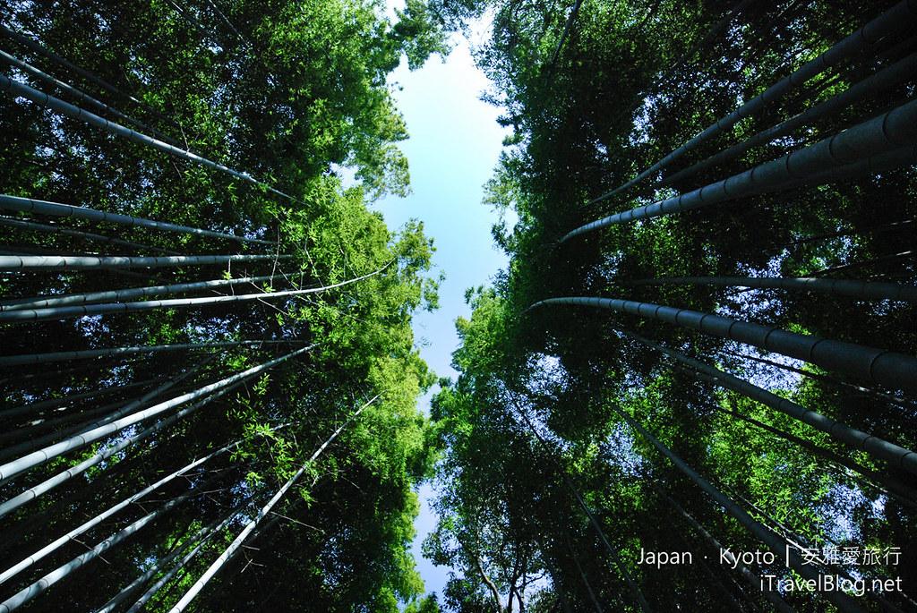 《京都景点推荐》晴,雨不同面貌下的岚山嵯峨野竹林,野宫神社.
