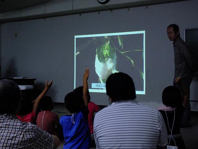 室内で事前学習.写真の中にモリアオガエルは何匹いるかな?