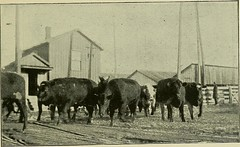 "Image from page 15 of ""Illustrated history of the Union Stockyards; sketch-book of familiar faces and places at the yards"" (1901)"