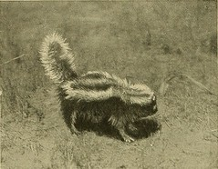 "Image from page 349 of ""Animal Life and the World of Nature; A magazine of Natural History"" (1902)"