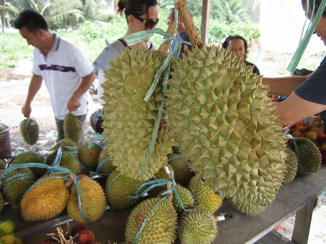 Oval-shaped durian