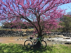 Redbud, Green Bike