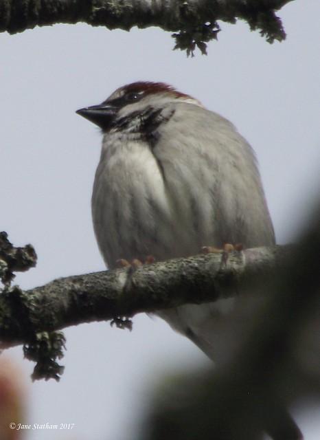 A House Sparrow enjoying, Fujifilm FinePix S1600